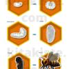 Bildset Entwicklung der Biene Voransicht