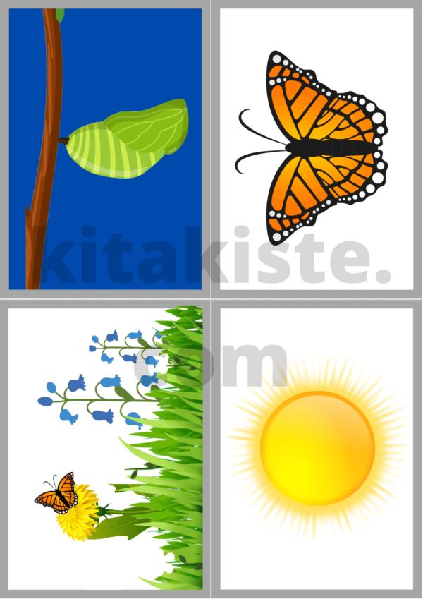 Bildset Schmetterling Krippe